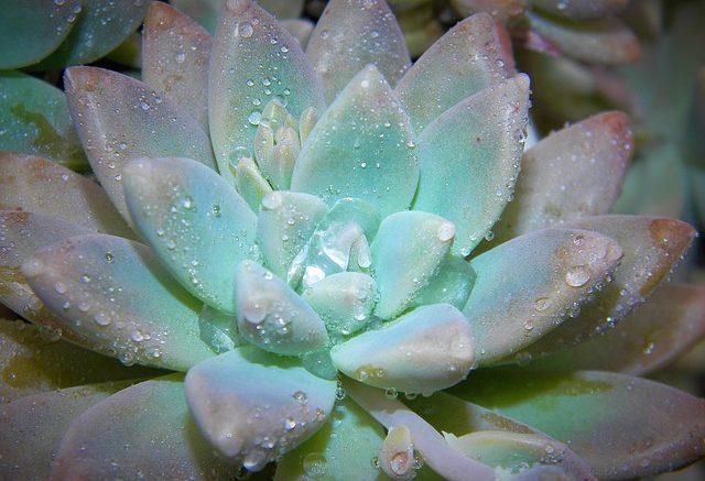 plante intérieur, plante extérieur, jardinerie en ligne, jardinerie, Ma Petite Jardinerie